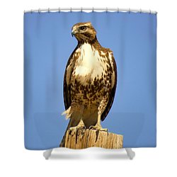 Red-tailed Hawk On Post Shower Curtain