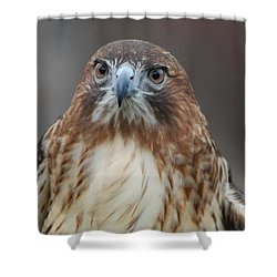 Shower Curtain featuring the photograph Red Tailed Hawk by Richard Bryce and Family