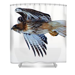 Red-tailed Hawk Winter Flight Shower Curtain