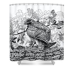 Red Tailed Huntress Shower Curtain