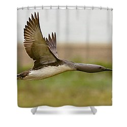 Red-throated Loon In Flight Shower Curtain