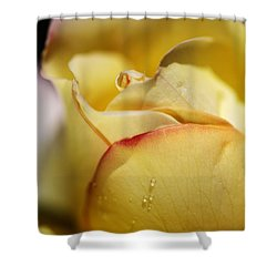 Red Tipped Yellow Rose Shower Curtain by Joy Watson