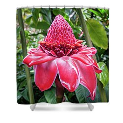Red Torch Ginger Flower Shower Curtain