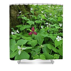 Red Trillium At Center Shower Curtain
