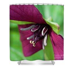 Red Trillium.. Shower Curtain