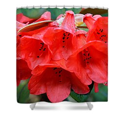 Red Trumpet Rhodies Shower Curtain