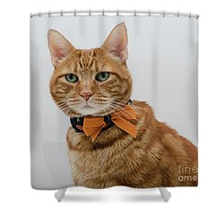 Red Tubby Cat Tabasco Halloween Shower Curtain