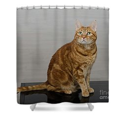 Red Tubby Cat Tabasco On Black Table Shower Curtain