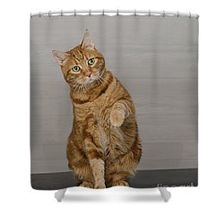 Red Tubby Cat Tabasco Waiving Shower Curtain
