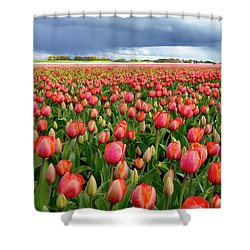 Red Tulip Field Shower Curtain