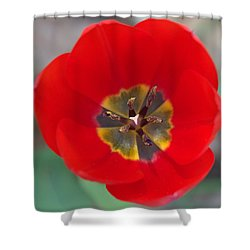 Red Tulip In 3d Shower Curtain by Liz Allyn