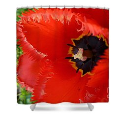 Shower Curtain featuring the photograph Red Tulip by Jean Bernard Roussilhe