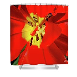 Red Tulip Shower Curtain by Nina Ficur Feenan
