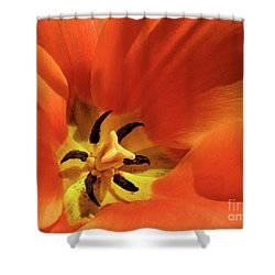 Shower Curtain featuring the photograph Red Tulip by Susan Cole Kelly