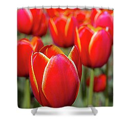 Red And Yellow Tulips I Shower Curtain