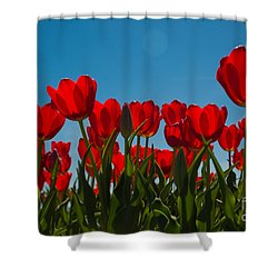 Red Tulips Shower Curtain by John Roberts