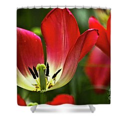 Red Tulips Petals Shower Curtain by Heiko Koehrer-Wagner