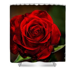 Shower Curtain featuring the photograph Red Velvet by Brenda Bostic