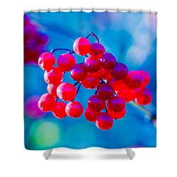 Shower Curtain featuring the photograph Red Viburnum Berries by Alexander Senin