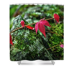 Shower Curtain featuring the photograph Red Vine by Bill Pevlor