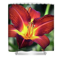 Shower Curtain featuring the photograph Red Volunteer. by Terence Davis