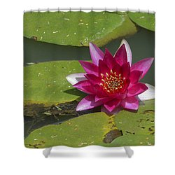 Red Water Lily Shower Curtain by Linda Geiger