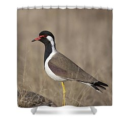 Red-wattled Lapwing Shower Curtain