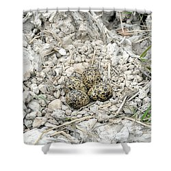 Red-wattled Lapwing Nest Shower Curtain