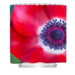 Red White Blue Anemone Shower Curtain