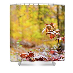 Red, White, Yellow Shower Curtain