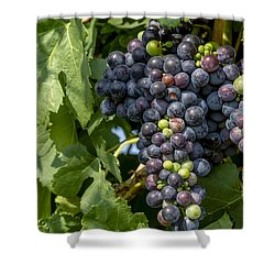 Red Wine Grapes On The Vine Shower Curtain by Teri Virbickis