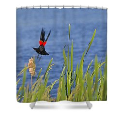 Red Wing Bow Shower Curtain by Shelly Gunderson