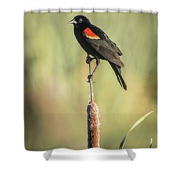 Shower Curtain featuring the photograph Red-wing On Cattail by Robert Frederick