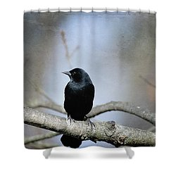 Red-winged Blackbird Shower Curtain