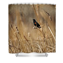 Red Winged Blackbird Shower Curtain by Ernie Echols