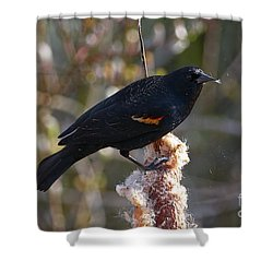 Shower Curtain featuring the photograph Red-winged Blackbird On Cattail Reed by Sharon Talson