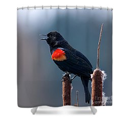 Red-winged Blackbird Singing Shower Curtain