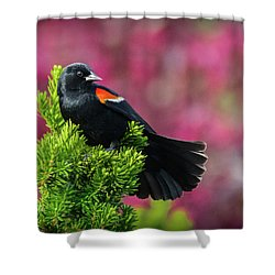 Red Winged Blackbird With Crabapple Blossoms Shower Curtain