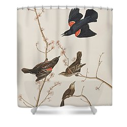 Red Winged Starling Or Marsh Blackbird Shower Curtain by John James Audubon
