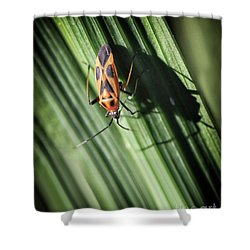 Red With Black Insect Shower Curtain by Stephan Grixti