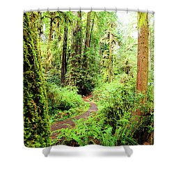 Red Woods Trail Shower Curtain