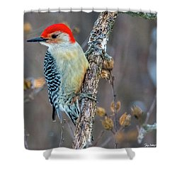 Redbellied Woodpecker Shower Curtain by Skip Tribby