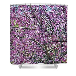 Redbud Tree Shower Curtain by Nadi Spencer