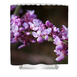 Shower Curtain featuring the photograph Redbuds In March by Jeff Severson
