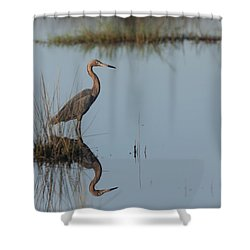 Reddish Egret And Reflection In The Morning Light Shower Curtain
