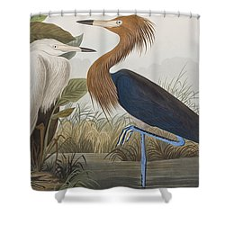 Reddish Egret Shower Curtain by John James Audubon