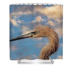 Shower Curtain featuring the photograph Reddish Egret by Kim Hojnacki