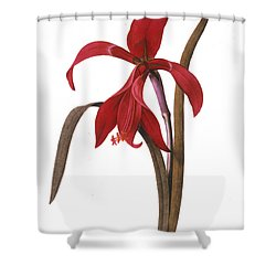 Redout�: St. James Lily Shower Curtain by Granger