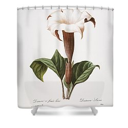 Redoute: Datura, 1833 Shower Curtain by Granger