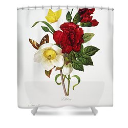 Redoute: Hellebore, 1833 Shower Curtain by Granger